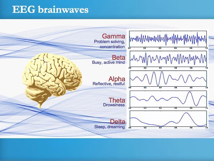 EEG_Brain_Waves_2011-11-05.jpg